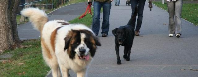 Jarní část hromadného očkování psů proti vzteklině je naplánovaná na 9. a 10. května 2018. Konkrétně se bude očkovat na Folknářích, v Březinách, na Chumu, v Křešicích, Boleticích, Nebočadech, Jakubech, […]