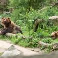 Poslední samice medvěda hnědého grizzly vČeské republice – Helga zděčínské zoologické zahrady – uhynula. Zoo Děčín tak přišla o ikonu, která byla společně smedvědem Siegfriedem tváří zahrady dlouhých pětatřicet let. […]