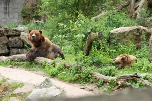 medvedi_zoo decin_aleso