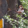 Pozor na polámané stromy na hřbitově Škrabky Upozorňujeme občany, že po bouřce 8.7.2014 došlo k pádu stromů na hřbitově Škrabky. Díky pádům jsou polámané větve i na okolních stromech, u […]