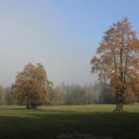 stromy_priroda_vegetacni klid_aleso