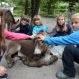 I v letošním roce proběhne v Zoo Děčín příměstský tábor. Níže přinášíme informace o tom, jak bude probíhat přihlašování dětí. PŘÍMĚSTSKÝ TÁBOR V ZOO 23. – 27. 7. 2018 Přihlášení […]