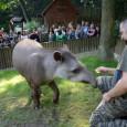 """Děčínská zoologická zahrada vyhlíží svého letošního stotisícího návštěvníka. Dle statistik by měl do zoo dorazit už během měsíce září. """"Aktuální návštěvnost nyní činí 96,5 tisíce příchozích. Do zoo tedy musí […]"""