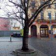 Do konce listopadu musí být z důvodu výskytu dřevokazné houby pokácena jedna z třešní na Masarykově náměstí. Ohňovec ovocný je houba způsobující hnilobu dřeva a následné snížení jeho pevnosti. V […]