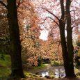 Projděte se Arboretem Kvádrberk se zajímavým výkladem dlouholetého pracovníka městské zeleně a dendrologa Václava Šafra. Akce se koná v neděli 20. května a sraz je v 15 hodin u vstupu […]
