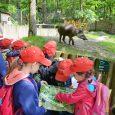 Po celý víkend děti do zoo jen za desetikorunu! Tak stakovou nabídkou přichází děčínská zoologická zahrada u příležitosti Mezinárodního dne dětí. Výhodné vstupné bude platit vtermínu od soboty 2. do […]