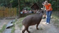 Téměř stovka adoptivních rodičů a přátel zoo přijala v sobotu 15. září pozvání na kulturní odpoledne v děčínské zoologické zahradě. Den adoptivních rodičů pořádá zoo každoročně jako poděkování mecenášům za […]